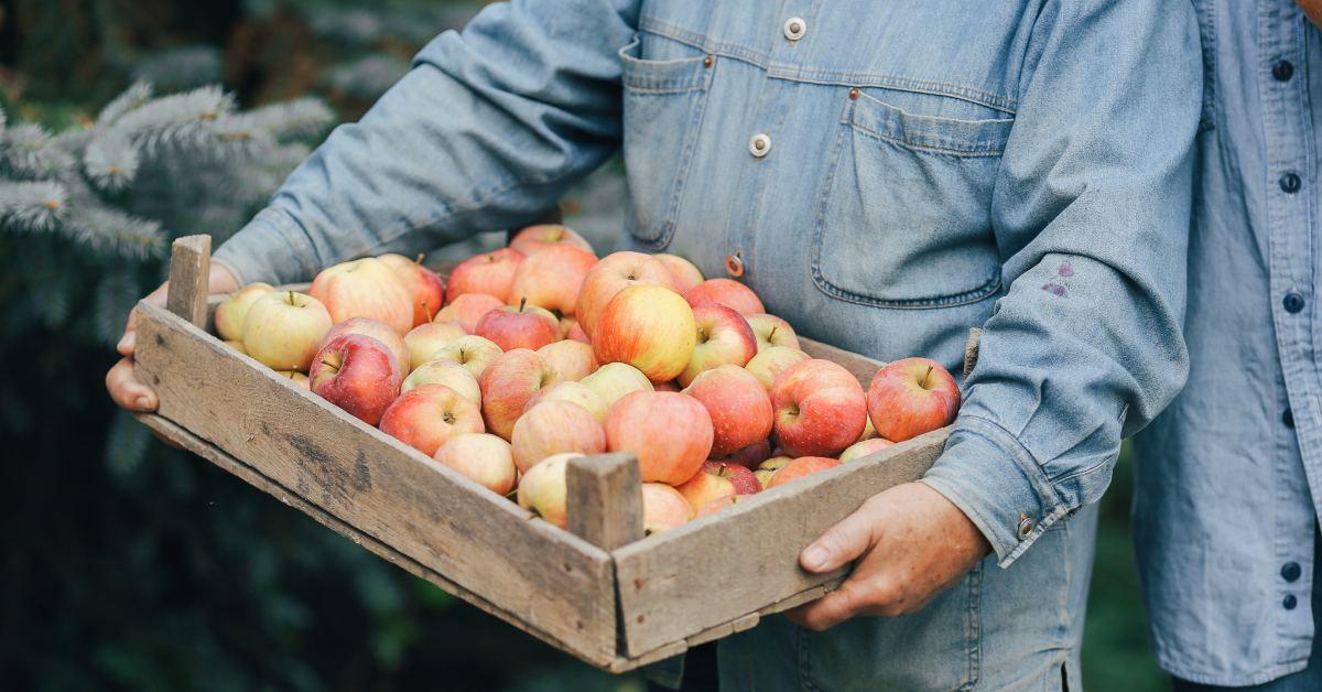 Príprava jablčného kvasu